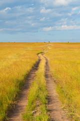 Path crossing the savannah