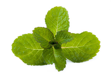 fresh mint isolated on white background_II
