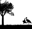 Stork with a baby in a bag in park in spring silhouette