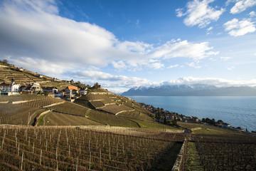 Lavaux, Vineyard Terraces, Switzerland