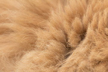 Animal fur texture background