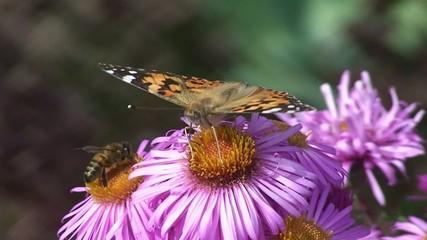 Papillon et abeille