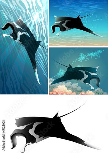 manta ray set