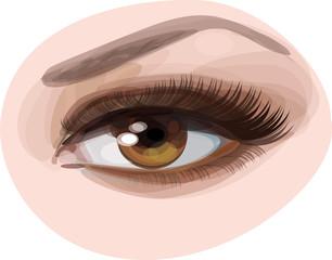 Vector of beautiful brown woman's eye.
