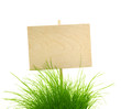 Empty Wooden Sign with Fresh Green Grass / isolated on white
