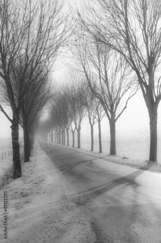 Tall bare trees besides a country road in winter