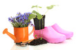 watering can, galoshes, tools and plants in flowerpot isolated