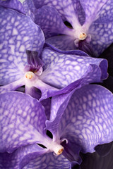 Three purple orchid flowers