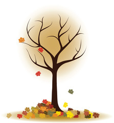 Autumn tree with falling leaves, maple leaves