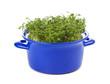 Gartenkresse in blauer Kasserole isoliert