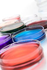 color liquid in old plastic petri dishes