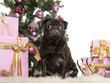 Pug sitting in front of Christmas decorations