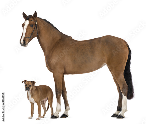 Crossbreed dog standing next to a Female Andalusian