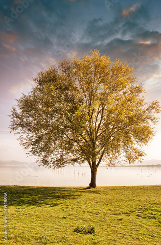 Solitary tree on grass isolated on a blue sky background with cl