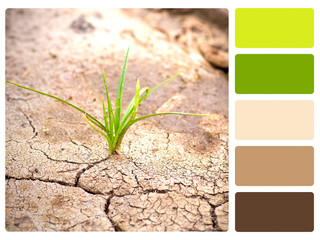 Green plant, cracked earth colour palette swatch