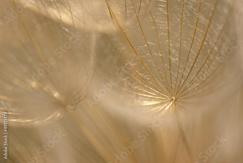 Keuken foto achterwand Paardebloemen en water Abstract colorful dandelion seeds with shallow depth of field