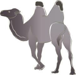 Ein Kamel mit zwei Höckern