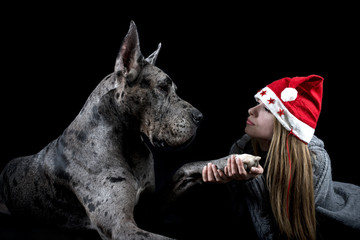 dog the Great Dane with the girl in a cap of Santa Claus