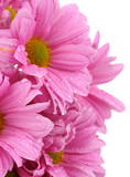 Fototapete Isoliert - Weiß - Blume