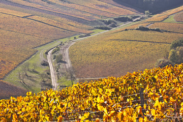 Chablis vineyard in Burgundy