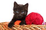 Fototapeta piłka - czarny - Zwierzę domowe