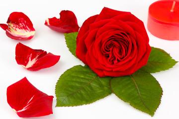 Wellness / Rose mit Rosenblüten auf weißem Hintergrund