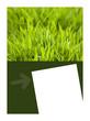 Fond, maquette, print, mis en page, jardin, végétal, marketing