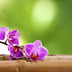 orquídea y bambú
