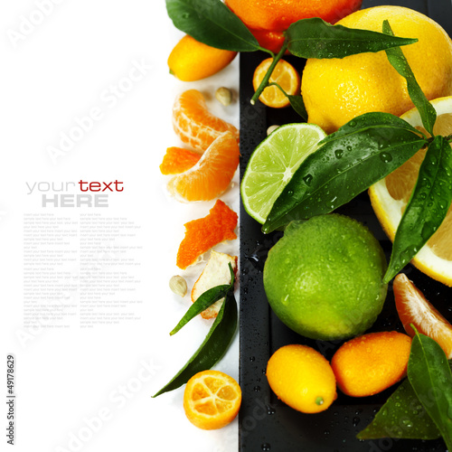 Citrus fruits border