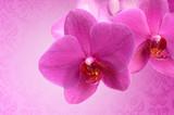 Fototapete Blühen - Botanical - Blume
