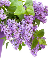 Bouquet of lilac flower