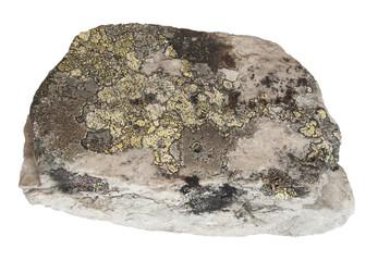 Stein mit Flechten