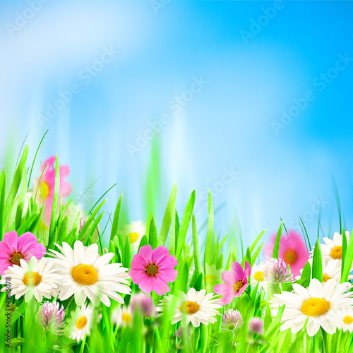 Beauty summer backgrounds for your design