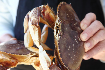man holds two live Dungeness crabs from the U.S. west coast