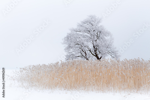 Lonely tree on the snow-covered lake - 49196269