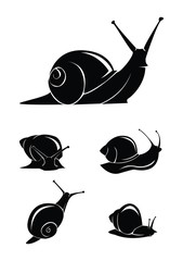 snail set collection