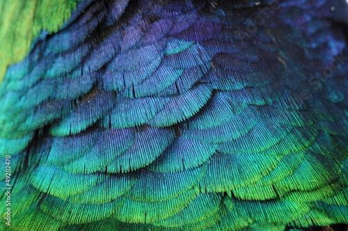 pióro tło kolor|49202470