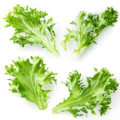 salad lettuce isolated. set