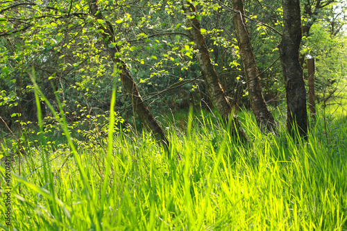 Beautiful Spring forest background