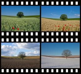 Baum im Kornfeld 4 Jahreszeiten