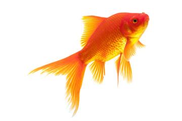 Red Goldfish