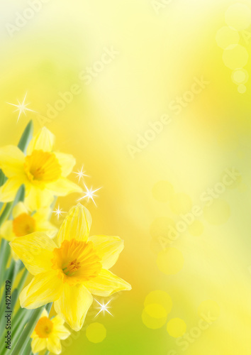 Plexiglas Narcis spring background with daffodils