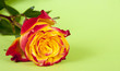 Rose auf grünem Hintergrund