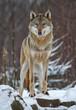 Fototapeten,wölfe,hund,tierpark,park