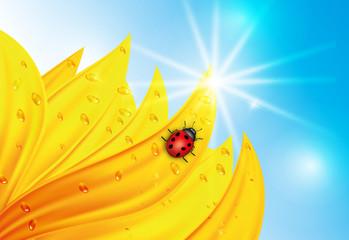 sunflower with ladybug