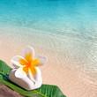 Galet, frangipanier, fond carré mer et plage