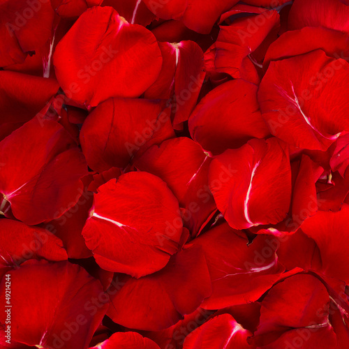 Beautiful Red Rose Petals Background Texture