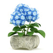 blue flower in stone pot isolated on white background