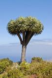 Fototapeta smok - Wyspy - Drzewo