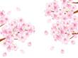 Obrazy na płótnie, fototapety, zdjęcia, fotoobrazy drukowane : 桜枝_白